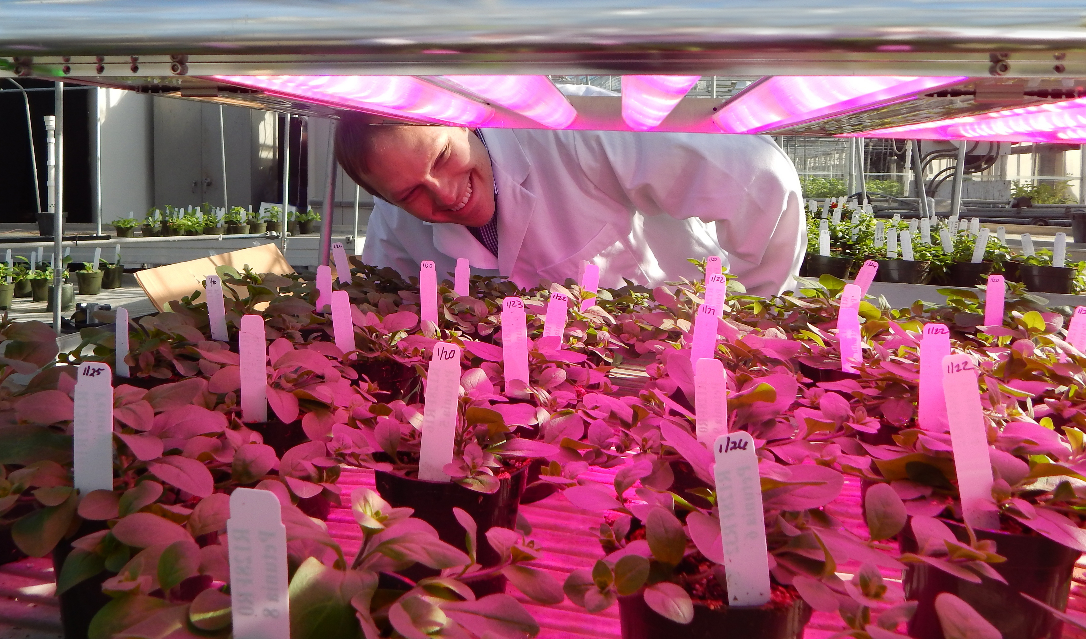 Gezielte Beleuchtung beim Vertical Farming (Interlighting)