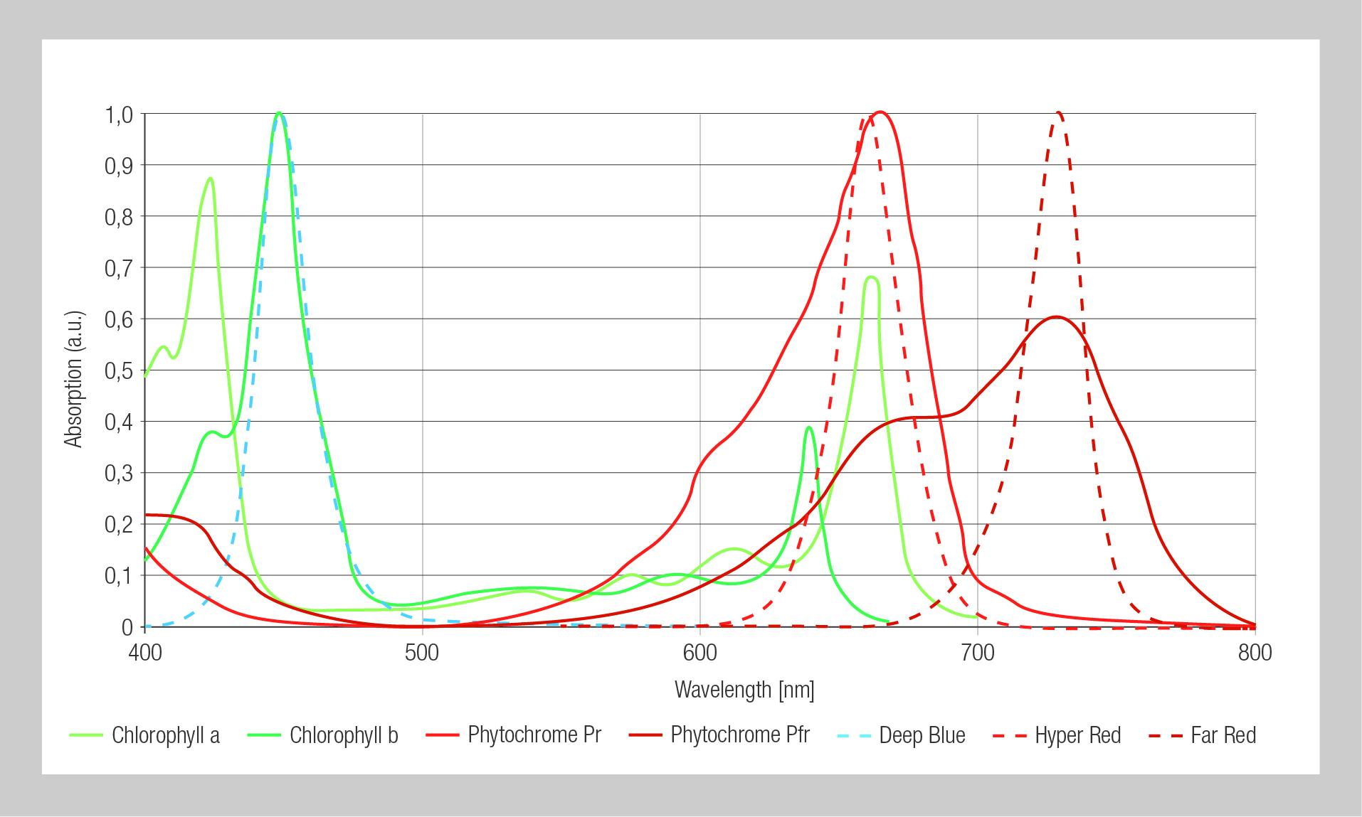 Lichtabsorption von Pflanzen