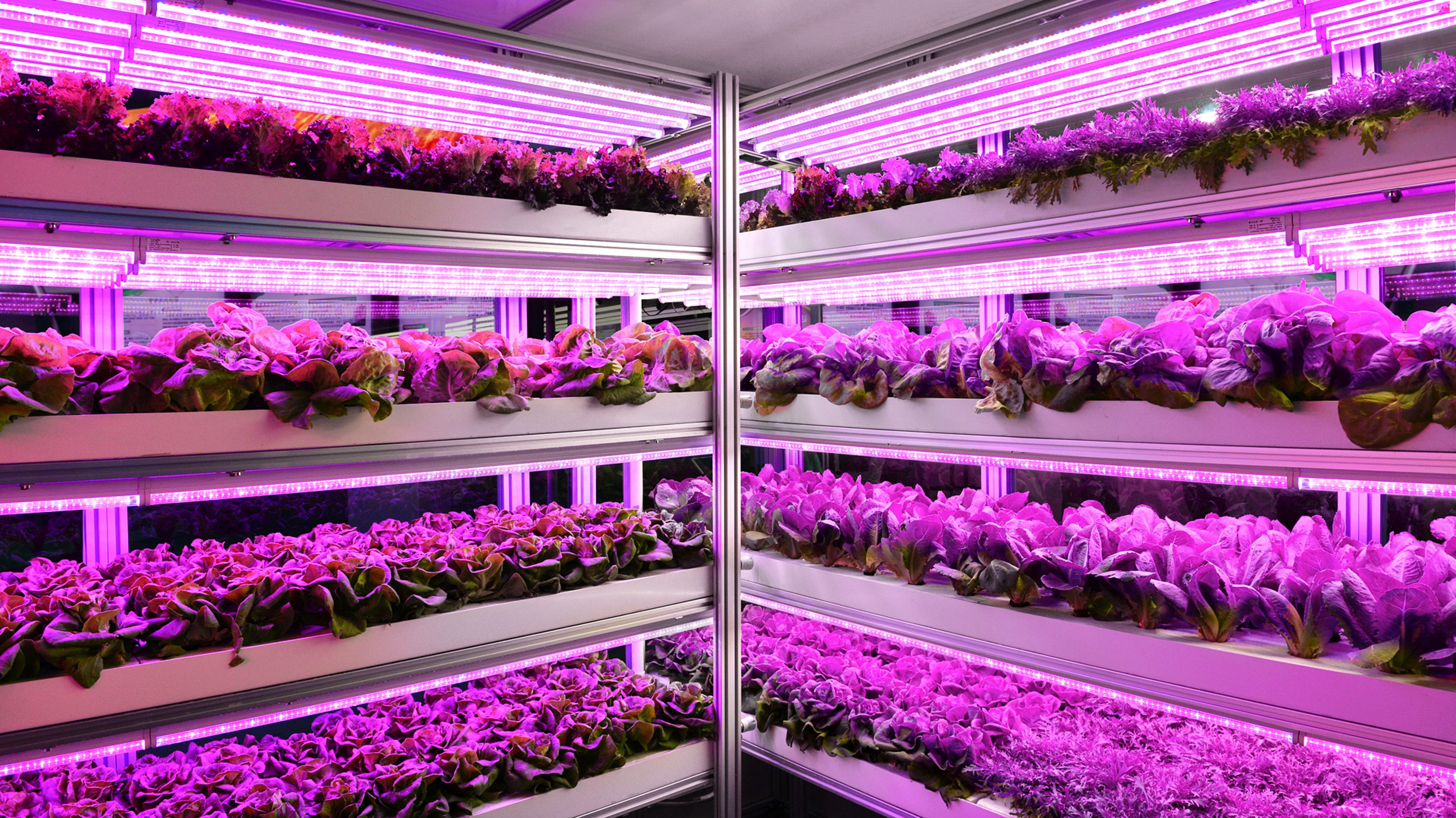 Zukunftstrend Vertical Farming (Multilayer Lighting)